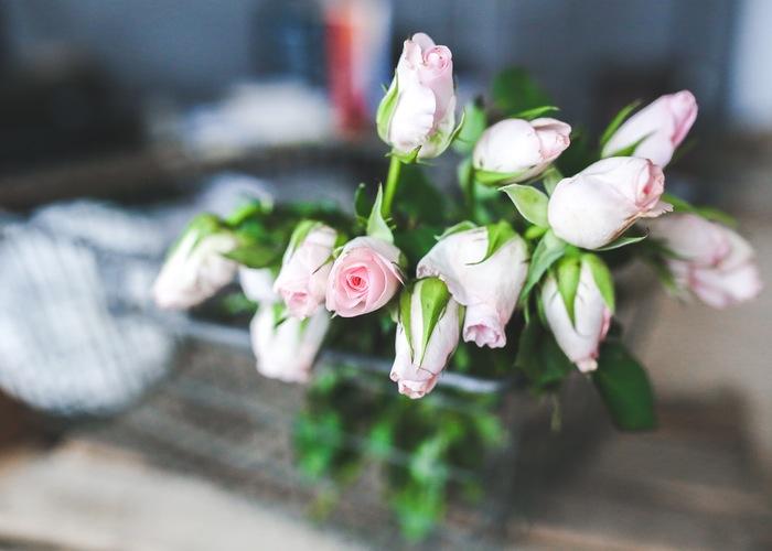 flowers-flower-roses-rose