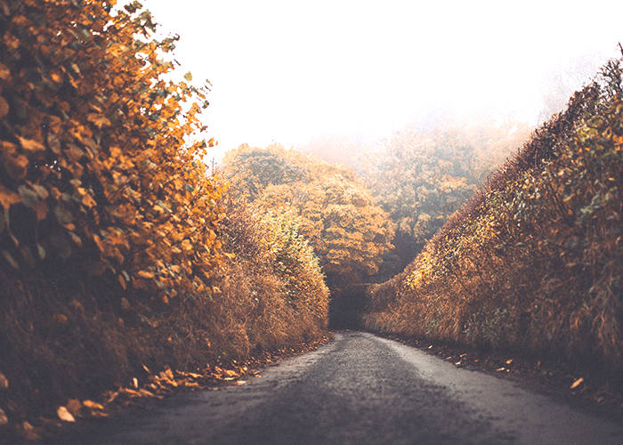 tfd_photo_misty-road-in-fall-leaves