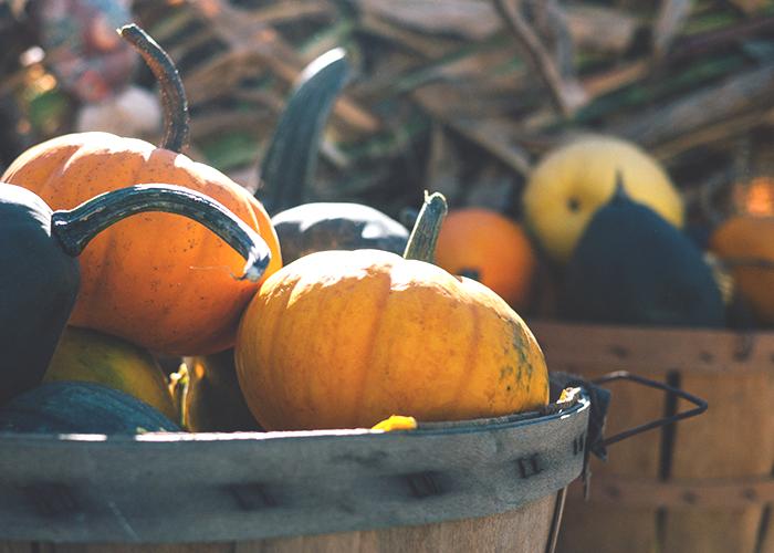 tfd_photo_pumpkins-in-barrel