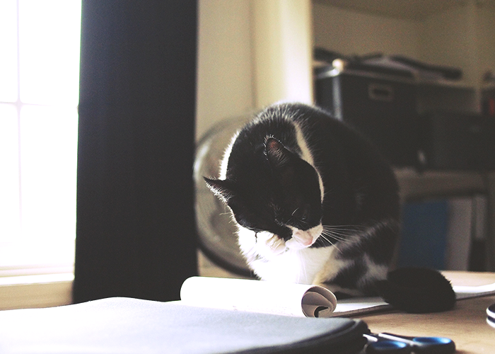 cat-on-desk