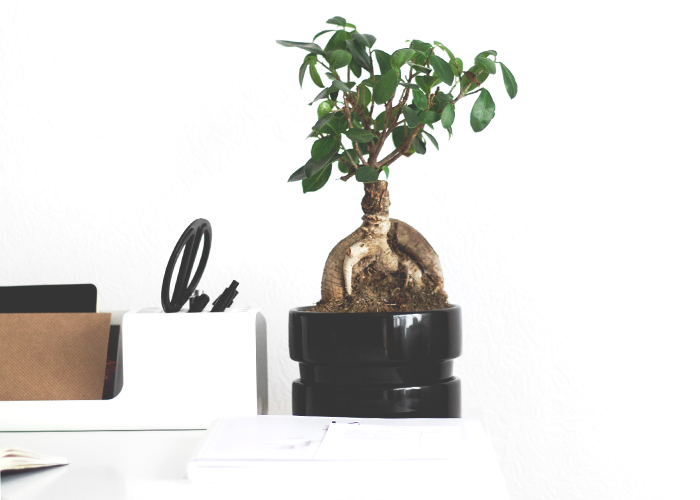 tree-in-pot-on-desk-workspace